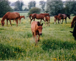 Godington Mares and Foals